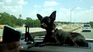 puppy singing with cold case theme song