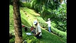 Landscaper and Landscape Design Clearwater FL 33756