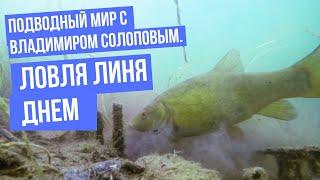 Подводный мир с Владимиром Солоповым Ловля линя днем