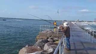 Two black drums caught on the Ponce Inlet Jetty