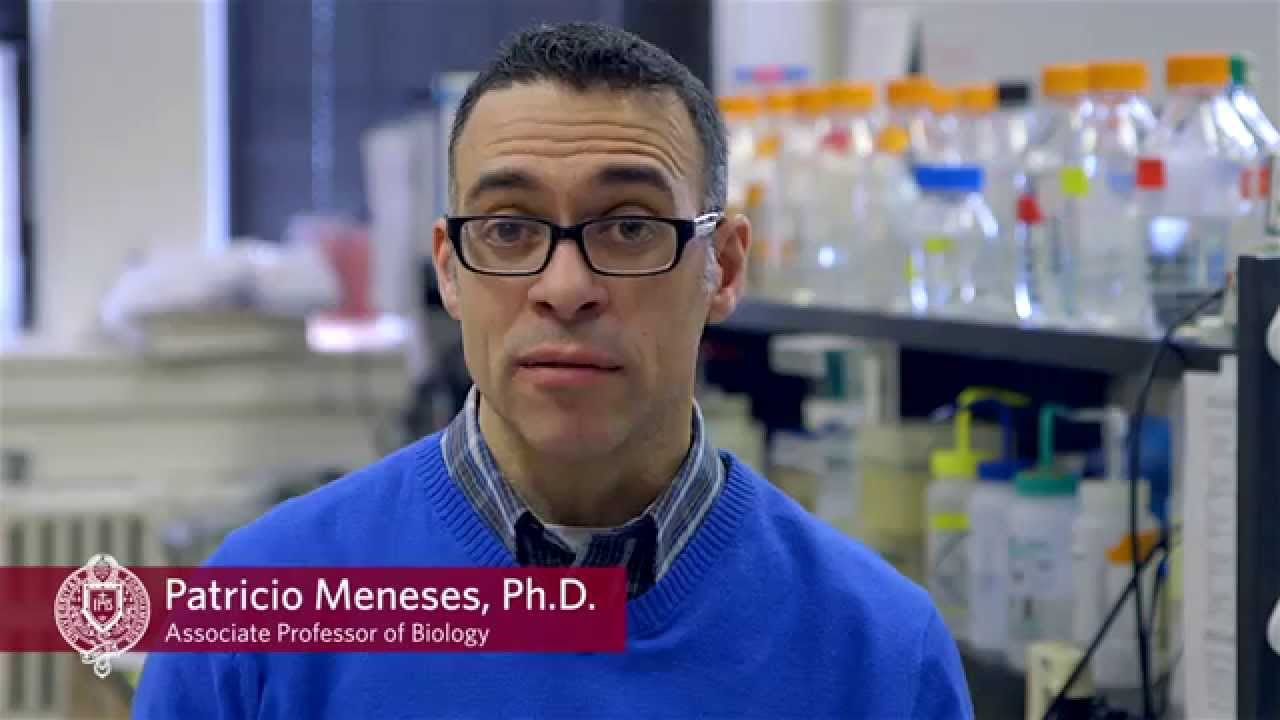 Fordham Biologists Working on Cure For HPV Virus