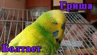 Попугай Гриша разговаривает