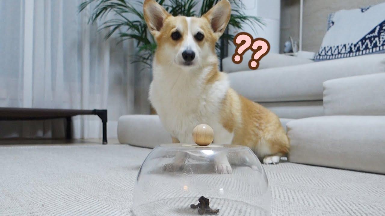 아리가 투명한 그릇 안 간식을 먹는 방법ㅋㅋㅋ