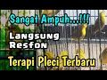 Terapi Masteran Pleci Ombyokan  Mp3 - Mp4 Download