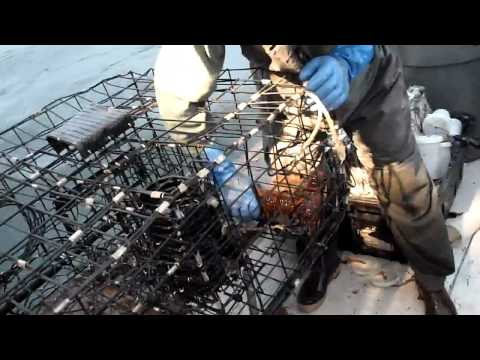 Lobster Fishing Southern California