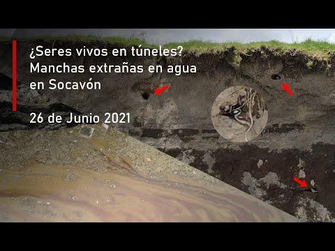 ¿Más seres vivos? El Socavón con lente x4 Zoom a detalle.. nuevos descubrimientos (26 de Junio 2021)