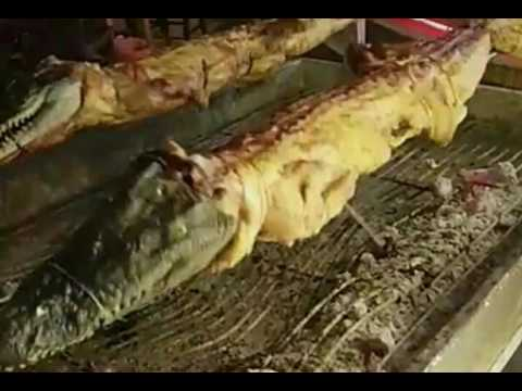 ما حكم اكل التمساح سؤال وجواب الشيخ النميري 1438 5 5 Youtube