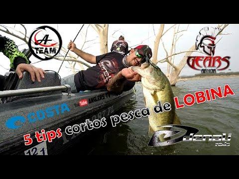 5 TIPS cortos / Pesca de LOBINA