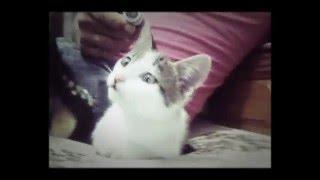 Little Cat lol