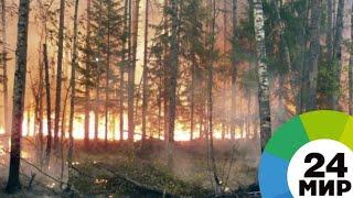 Площадь лесных пожаров в Забайкалье за выходные выросла вдвое - МИР 24