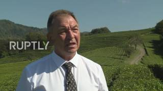 Russia: British tea lovers to get a taste of Russian tea