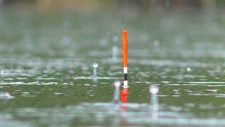 Летняя рыбалка 2021  Дожди и грозы продолжаются. На поплавок и боковой кивок. My Fishing