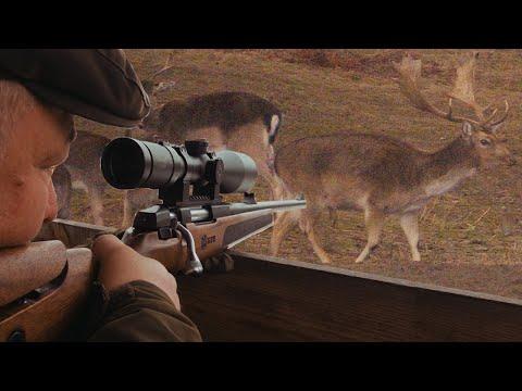 BULGARİSTAN ALAGEYİK AVI Fallow Deer Bulgaria Balkan Av Hunting