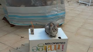 cute kitten video plays on garden table jumps off box Chloe the Exceptional Cat 21 October 2014