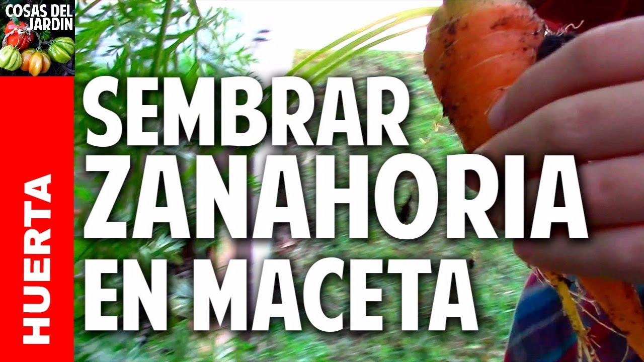 Los 4 secretos para cultivar zanahorias como la gente @cosasdeljardin