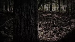 LOST IN THE WOODS! A True Bigfoot Encounter Story From a Listener