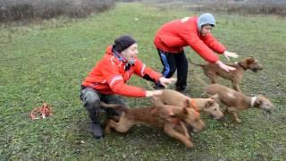 Irish Terriers Tula