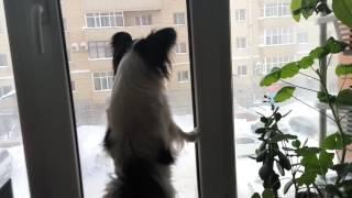 Собака смотрит в окно!!!