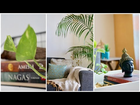 Home Decoration Ideas Using Indoor Plants || Beginners Guide for Green Decor || InteriorMaata