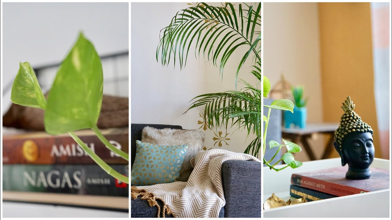 Home Decoration Ideas Using Indoor Plants Beginners Guide For Green Decor Interiormaata Youtube