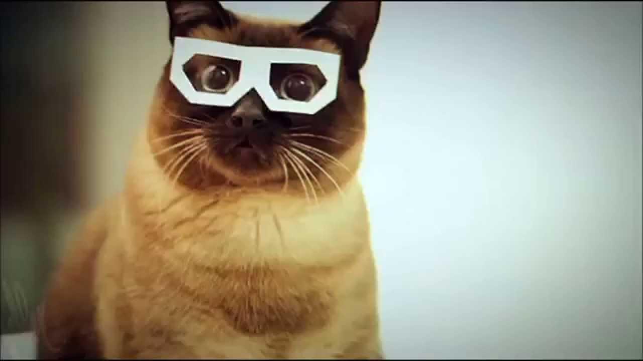 dubstep cat full song sssshawnnnn