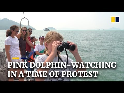 Pink dolphin-watching in