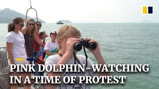 Pink dolphin-watching in Hong Kong, amid anti-government protests