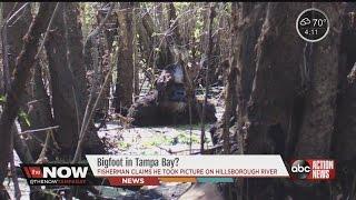 Bigfoot in Tampa Bay?