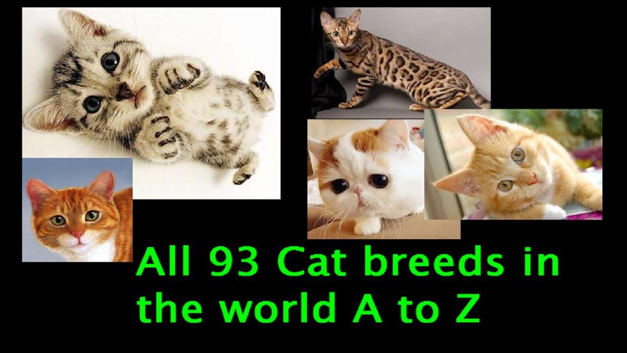 Healthiest Cat Breeds Uk