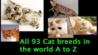 All 93 Cat Breeds In The World (A to Z)