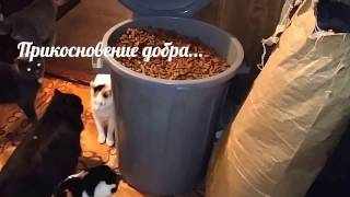 Прикосновение добра Приют для животных Новосибирск animals in the shelter waiting for help