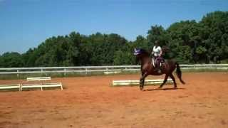 Randi Thompson.Canter. Is your horse behind the vertical? Dressage