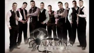 ALACRANES MUSICAL VIVO EN TU PIEL