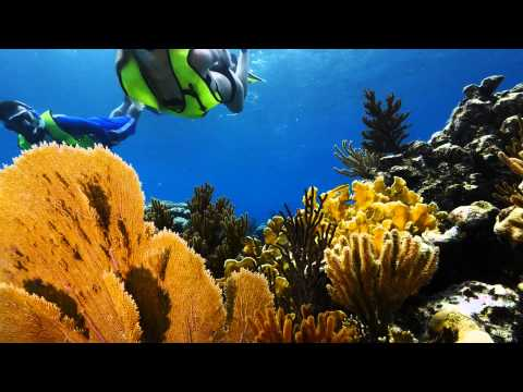 Snorkeling Adventure in Bahamas with Tropical Reefs & Sharks - Video