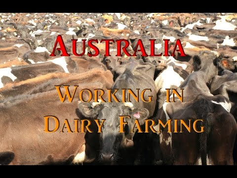 World Tour - Farm Job Australia  #14 (Vagabond Instinct)