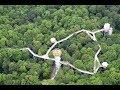 ლაგოდეხში ხის კენწეროების ბილიკის მშენებლობა იწყება