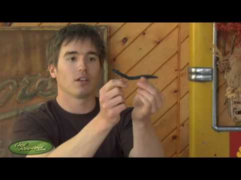 Bass fishing how to rig a plastic worm senko youtube for How to fish with plastic worms