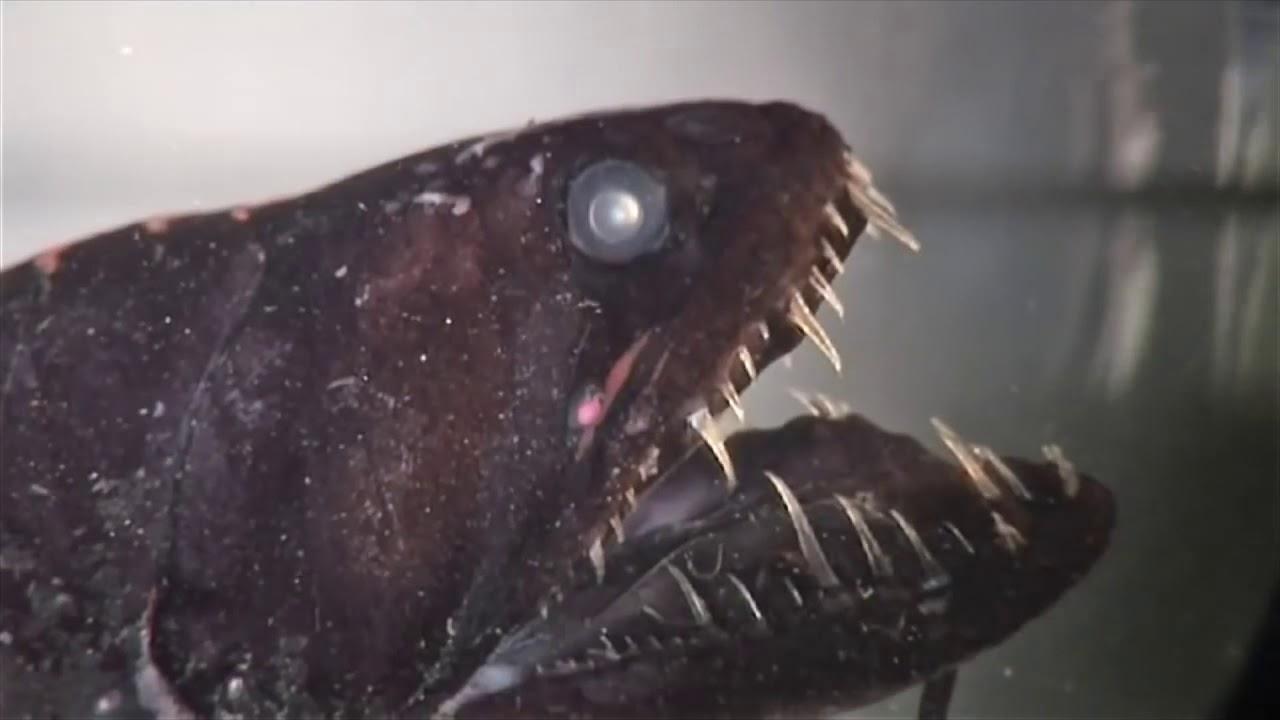 Gruselige Fische