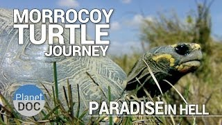 Morrocoy Turtle Journey. Paradise in Hell | Full Documentary - Plantet Doc Full Documentaries