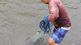 Así se pesca con atarraya en las pozas de los ríos