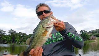 catching bass at Logan Martin lake up river early June 2021