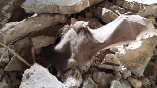 עמותת ע.ט.ל.ף - סיכום 2016  the Israeli bat Sanctuary - Summary