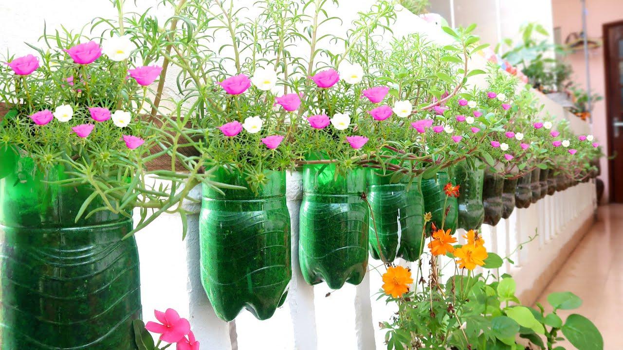 7 creative gardening tips for your garden 🌳🌳🌳🌳