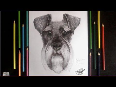 Dibujando Un Perro Schnauzer A Lapiz Y Boligrafo Drawing A Dog Schanuzer Hd