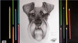 Dibujando un perro schnauzer a lapiz y boligrafo 🐶| Drawing a dog schanuzer | HD🐶🐾