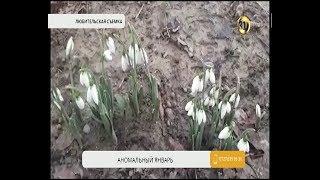 На большей части Туркестанской области установилась аномально теплая погода