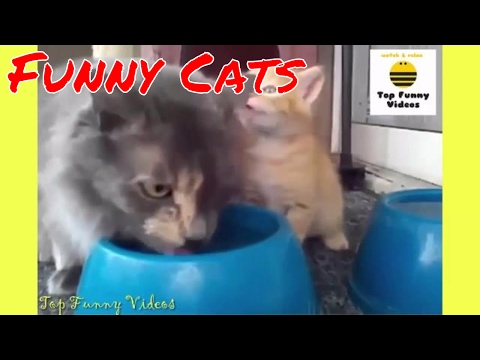 Funny Cats Compilation 2017 [P15] - 🐱😂 Best Funny Cat Videos Ever - Funny Cats 2017 by TFVs