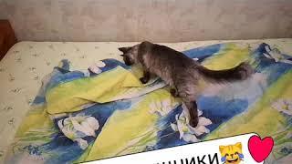 Коты помощники по хозяйству
