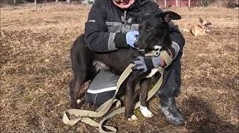 Viipurin koirat - Vilna 13.3.2020