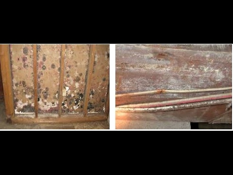 Black Mold On Wood Review